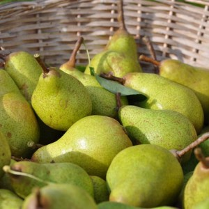wildpears